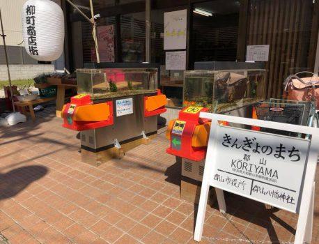 「金魚スポット再発見ワークショップ」開催レポート
