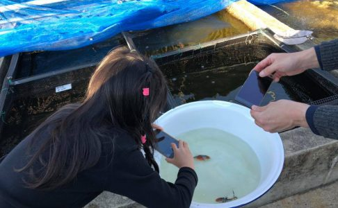 【イベント報告】まちなか金魚生息地マップ作り! 800枚を超える金魚画像を収集!!